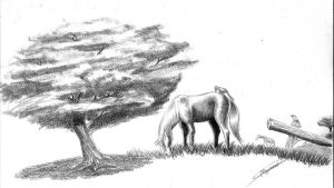 Horse in graphite by gabrielmaurano