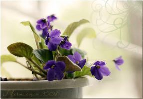 Tenderness of violets... by mechtaniya