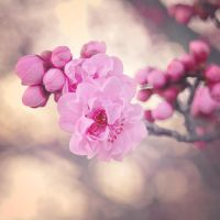 spring by Fwirll