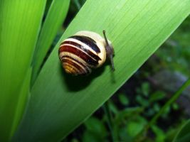 Snail by Abrimaal