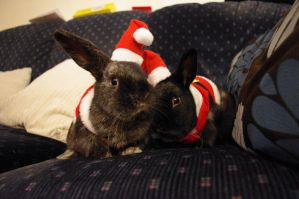 The Bunnies wanted to say Merry Christmas by Underestimated-Rain