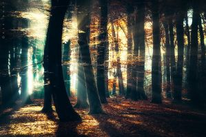 Battle of the Light by Oer-Wout