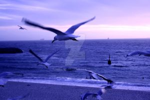 Seagull's at sunset by meeshel99