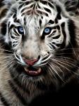 White Tiger 2 by mceric