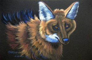 Maned Wolf by HouseofChabrier