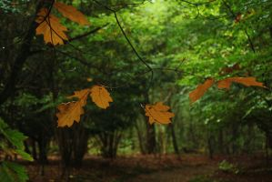 autumn leaves 3 by marob0501