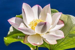 Locus Blossom by 904PhotoPhactory