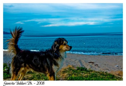 The Sea and the Dog by Gianvito