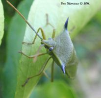 Stink Bug Camouflage by BreeSpawn