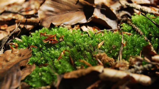 moss by wntrb