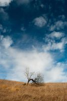 A lonely tree on a hill by DANZIEG
