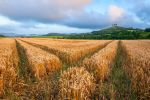 Colmers Wheat by JamesHackland