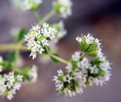 Small Flowers in Groups by Dramier