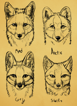 Summer North America Fox faces by Skeleion