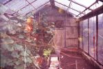 greenhouse of your dreams by 6igella