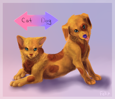 Cat-Dog by felix-monster