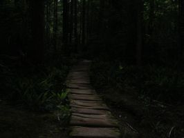 Forest of Darkness by Shanen888