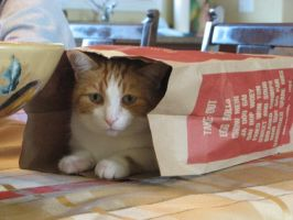 Kitty Take Out by ChrissyConstantine20