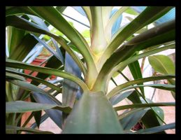 the plant by lucaport