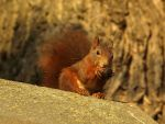 October 26th Squirrel 6 by Taliesin-Neonblack