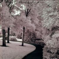 Path through Cotton Candy - IR by La-Vita-a-Bella