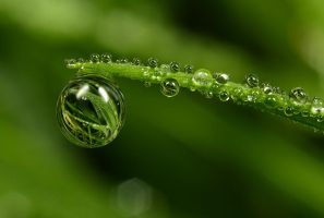 Natural Refractions by Alliec
