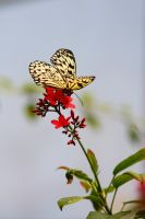 Butterfly Landing on Flower by froggynaan