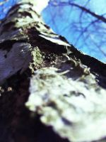 Underneath a birch. by macharovsky