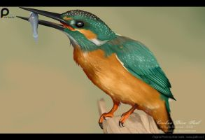 King Fisher by pixellorac