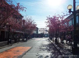 Cherry Bloosom Trees At Pike Place Market by SilentMobster42