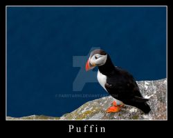 Puffin by FarStar90