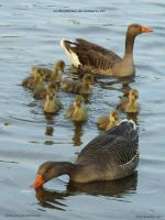 Family Outing by In-the-picture