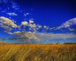 Beautiful Grasslands by greenunderground