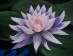 Water Lily by LenaZLair