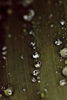 Waterdrops on a leaf IV by luka567