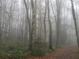 Foggy day in the forest by Leinnn