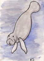 Manatee by littlekelly