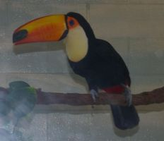 Toucan - 11 by OverStocked