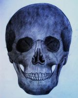 Skull 1 by RedKronos92