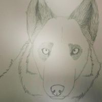 Wolf .:sketch-unfinished:. by BlackLightning95