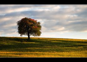 The Wishing Tree by iustyn