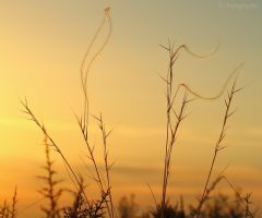 Sunset nature flags by Jorapache