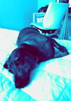 MY DOG IS NOW A SMURF AHAH by lullabyly