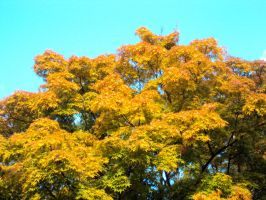 autumn tree firebright by TomBydand