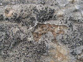 Stone Texture 07 by vl2r
