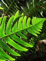 fern. by chanmanthechinaman
