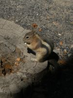 Cheeky Chipmunk by rioka