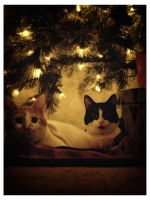 Christmas Kitties02 by sees2moons