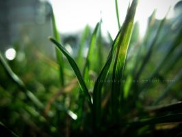another grass wp by stefiloveskyle