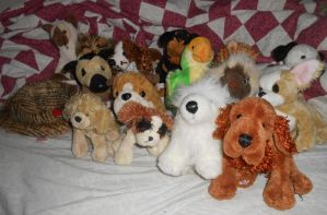 For sale--Webkinz (used, no codes or tags) by Colliequest